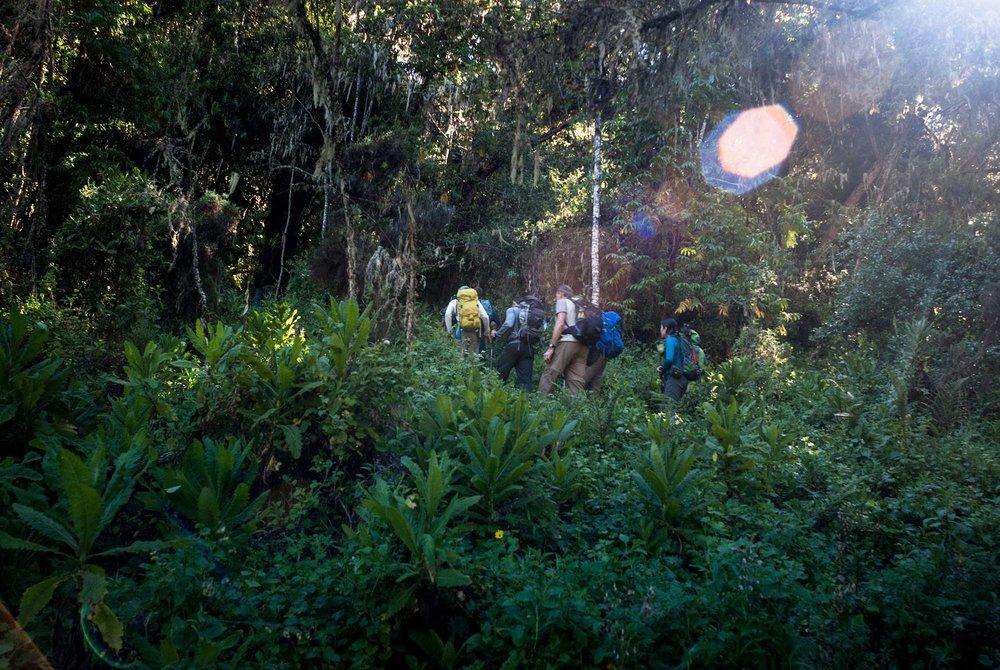 D2-09-Jungle-all-the-way-kilimanjaro.jpg