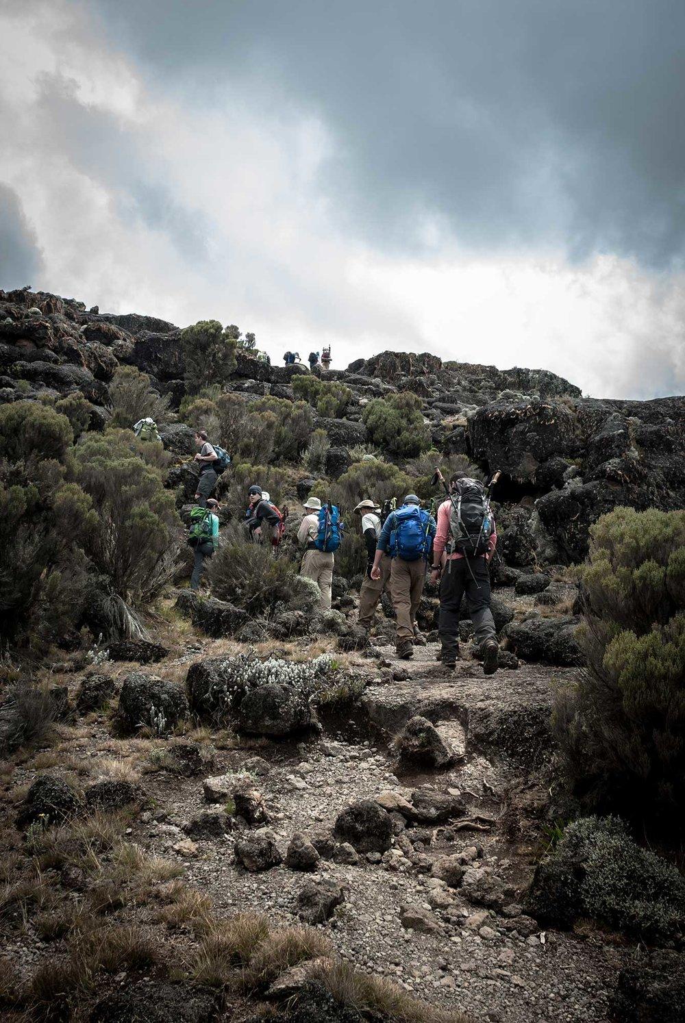 D3-23-Kilimanjaro-climbers-heading-to-Moir-Hut-Camp-01.jpg