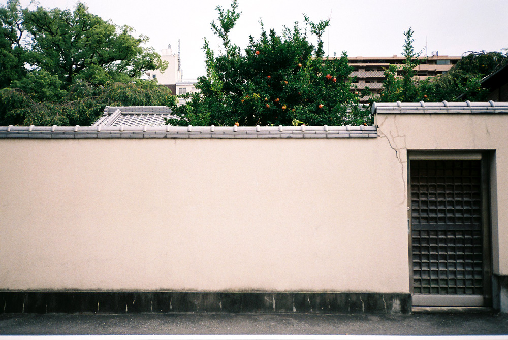 wall1_FH010019.jpg
