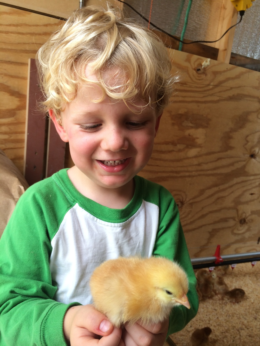 Our son helps greet the chicks.
