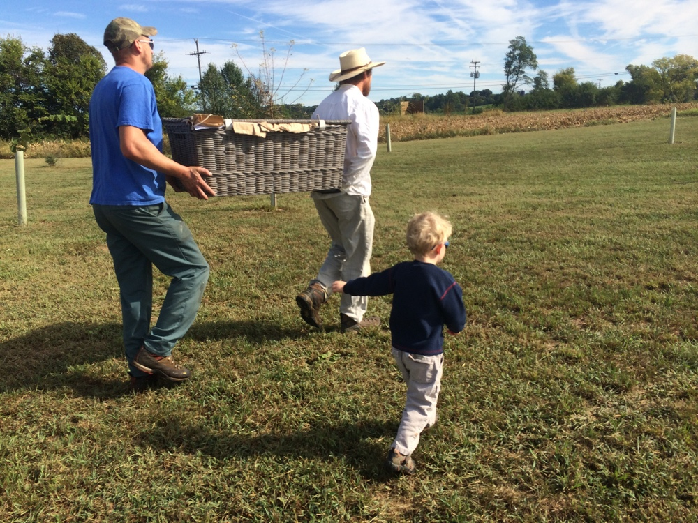 At three weeks of age, the chickens are moved from the brooder to pasture shelters.