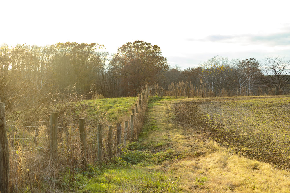 Corcoran Farm5.jpg