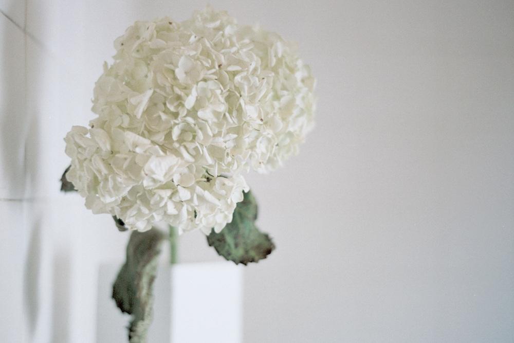 03_FlowersCS.jpg.jpg