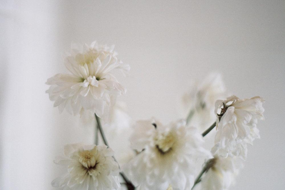05_FlowersCS.jpg.jpg