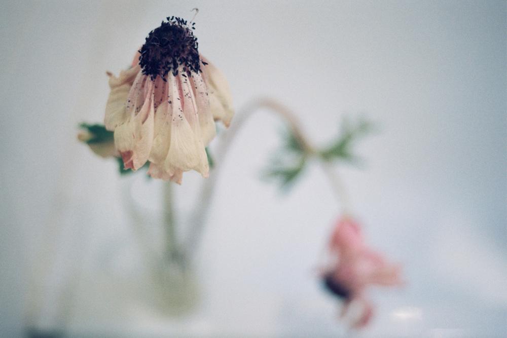 10_FlowersCS.jpg.jpg