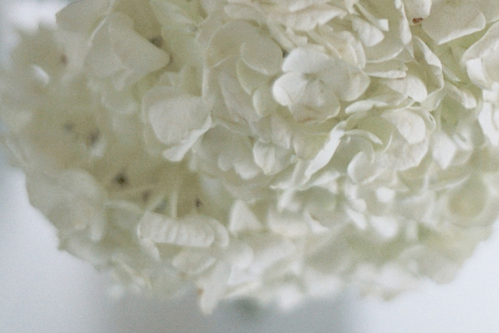 15_FlowersCS.jpg