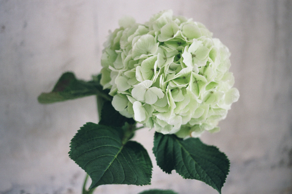 29_FlowersCS.jpg