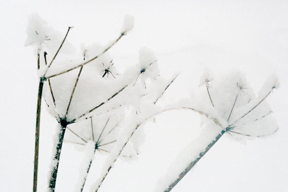 38_FlowersCS.jpg