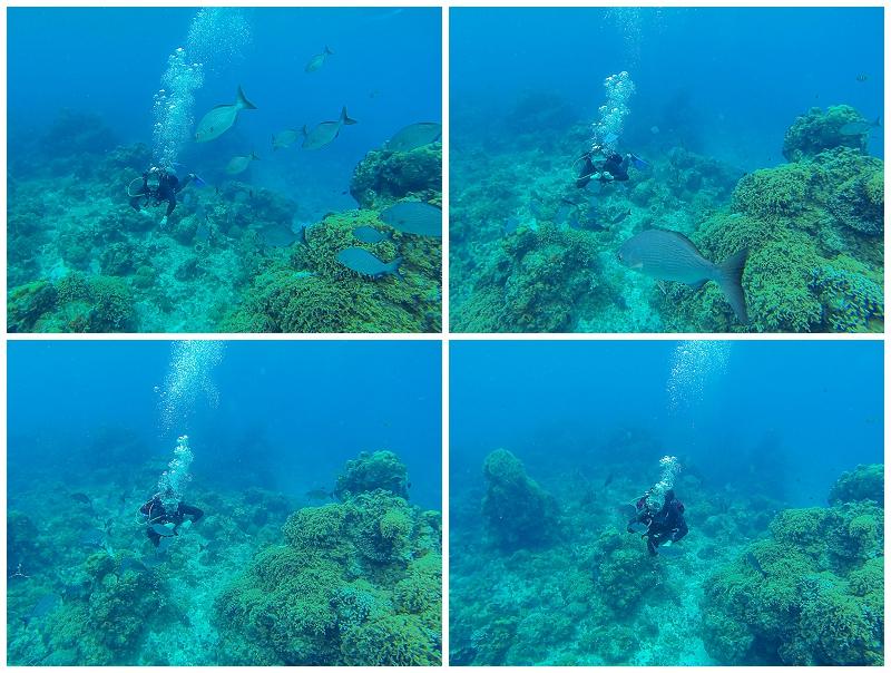 Caribbean+Vacation+Cozumel+Mexico+SCUBA+diving+%252812%2529.jpg