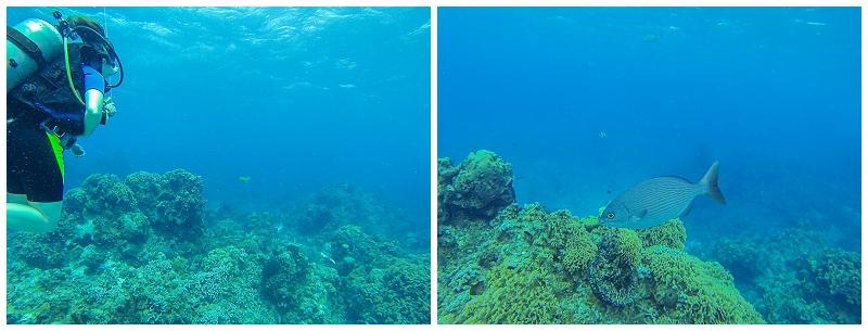 Caribbean+Vacation+Cozumel+Mexico+SCUBA+diving+%252811%2529.jpg