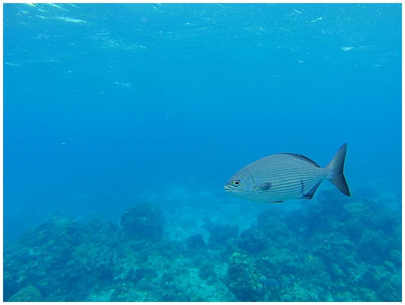 Caribbean+Vacation+Cozumel+Mexico+SCUBA+diving+%252810%2529.jpg