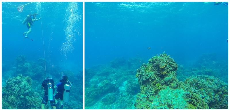 Caribbean+Vacation+Cozumel+Mexico+SCUBA+diving+%25289%2529.jpg