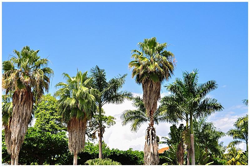 Caribbean+Vacation+Ocho+Rios+Jamaica+Port+2014+(38).jpg