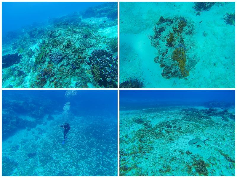 Caribbean+Vacation+Cozumel+Mexico+SCUBA+diving+%252832%2529.jpg