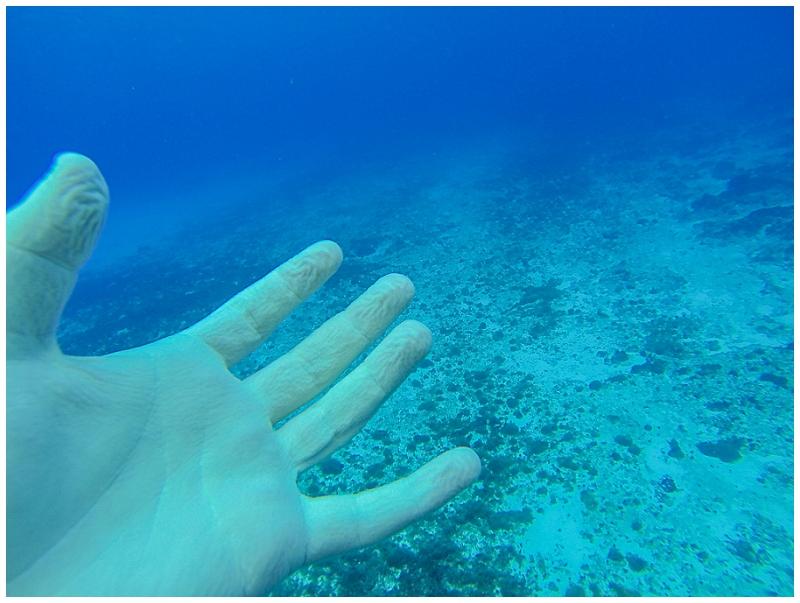 Caribbean+Vacation+Cozumel+Mexico+SCUBA+diving+%252831%2529.jpg