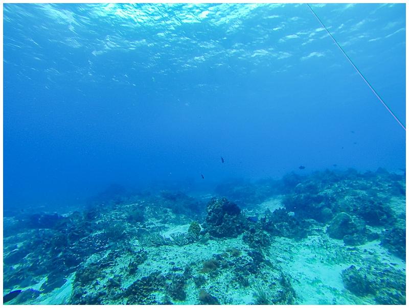 Caribbean+Vacation+Cozumel+Mexico+SCUBA+diving+%252829%2529.jpg