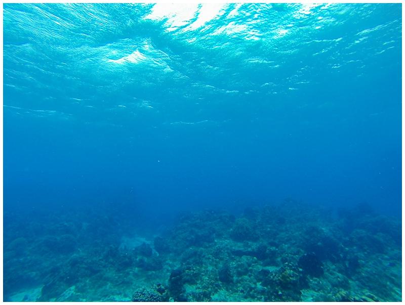 Caribbean+Vacation+Cozumel+Mexico+SCUBA+diving+%252818%2529.jpg