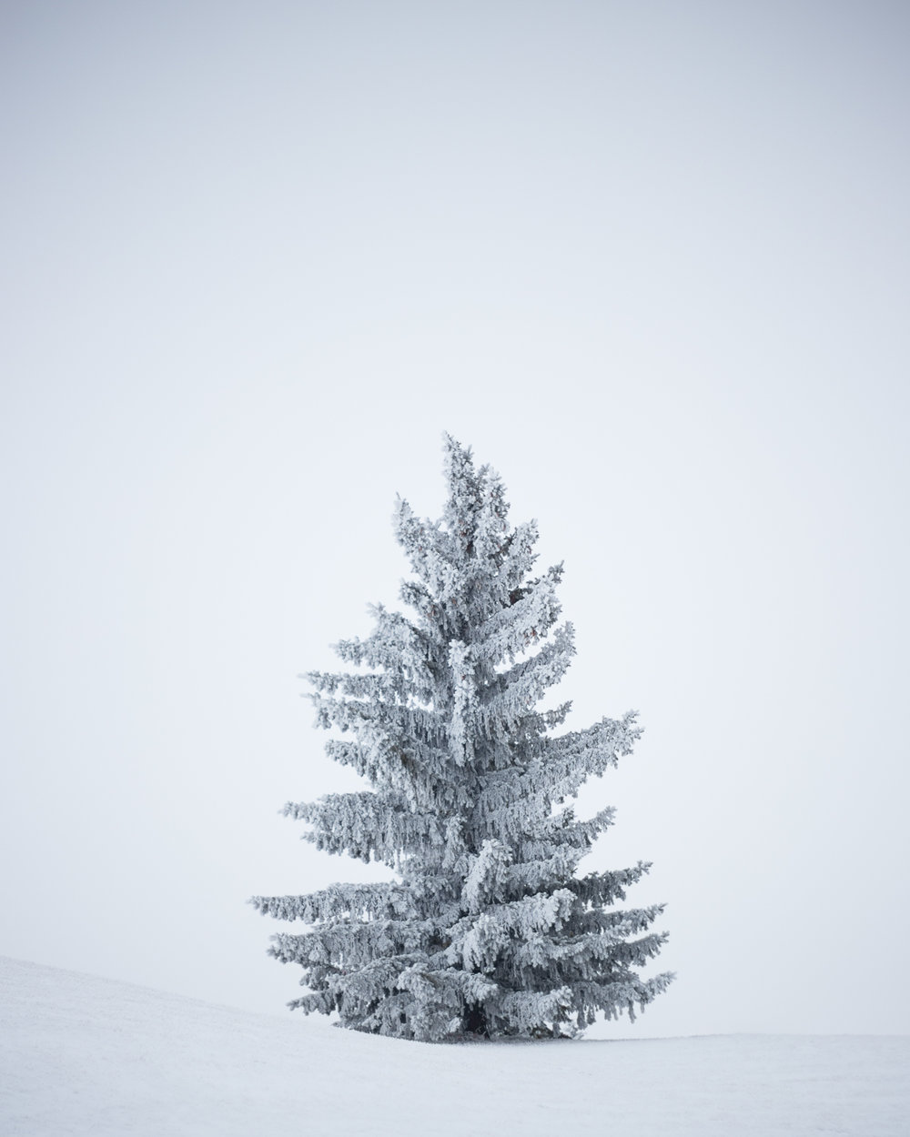 Winter Walks - December 1