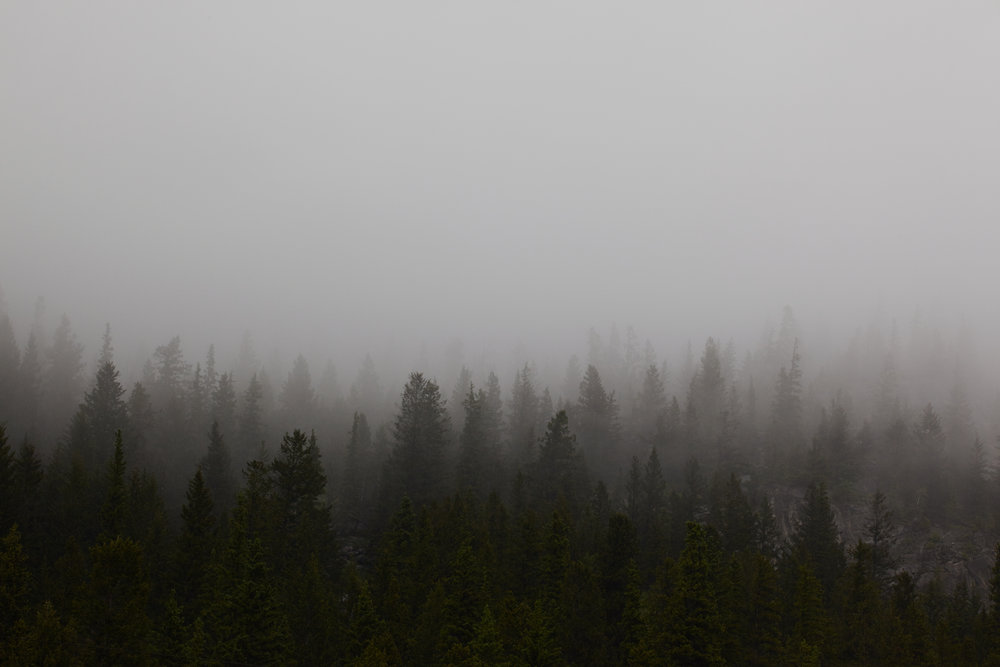 Clouds forming over a dark forest, Canmore, Alberta