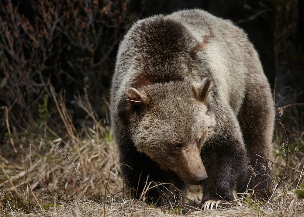 Wildlife -