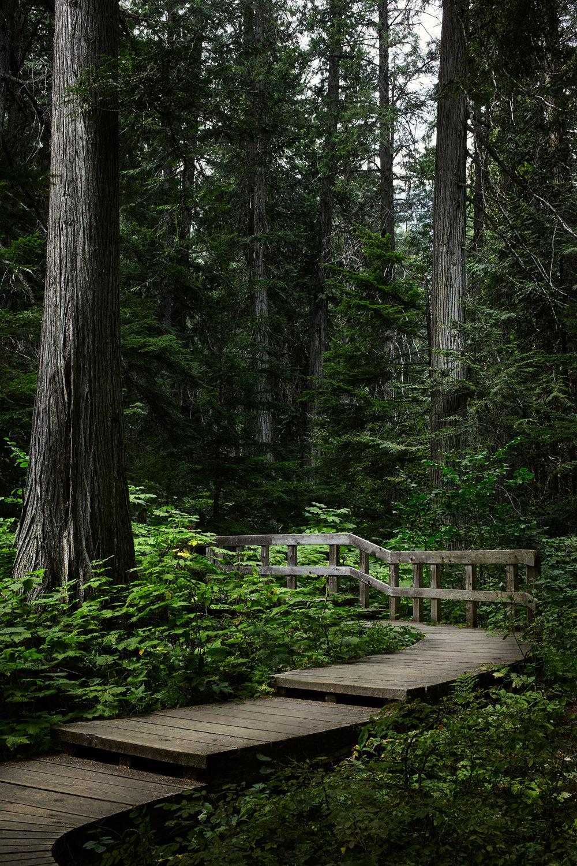 Giant-Cedars.jpg