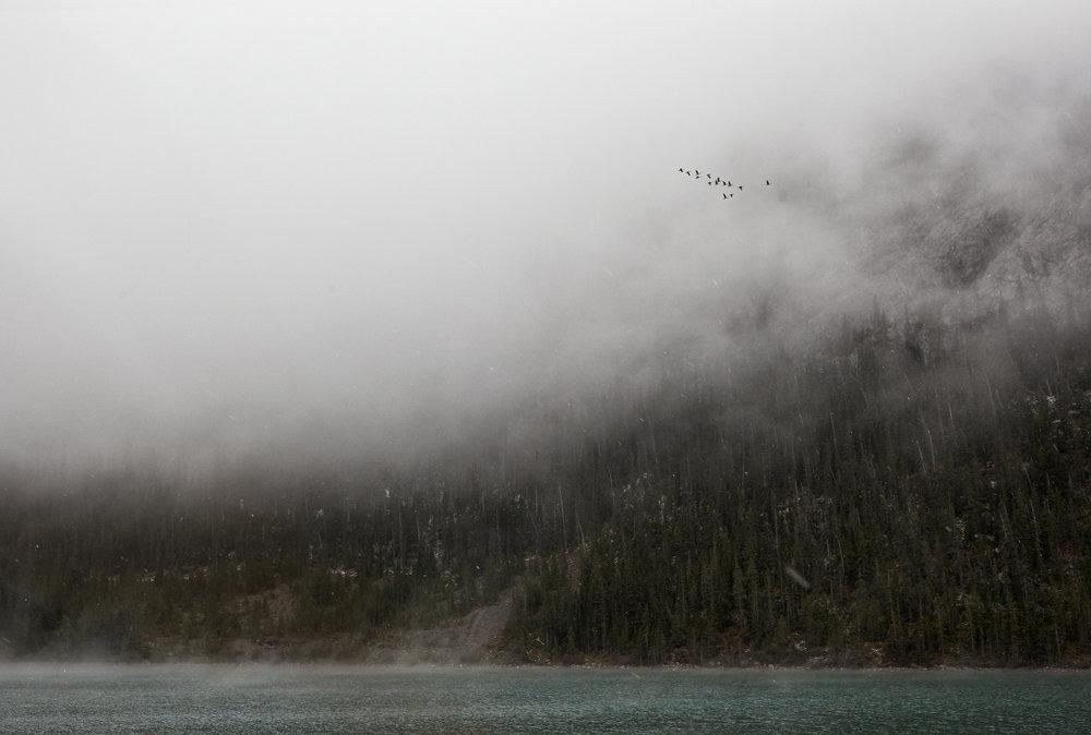 FleeingtheStorm.jpg