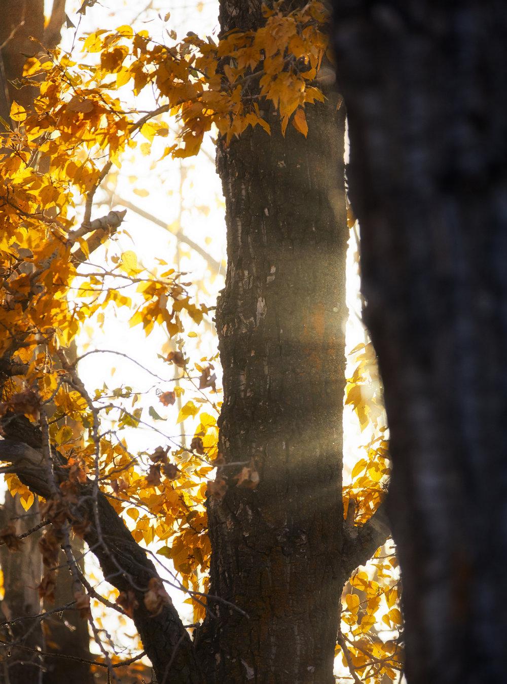ForestSunshine.jpg