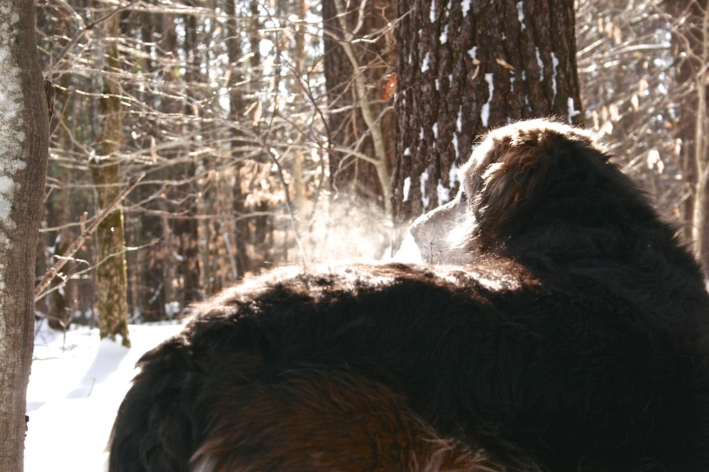 dog-in-snowy-maine.jpg