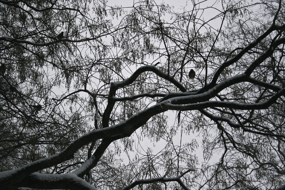 Bird-in-a-tree-silhouette-wbc.jpg