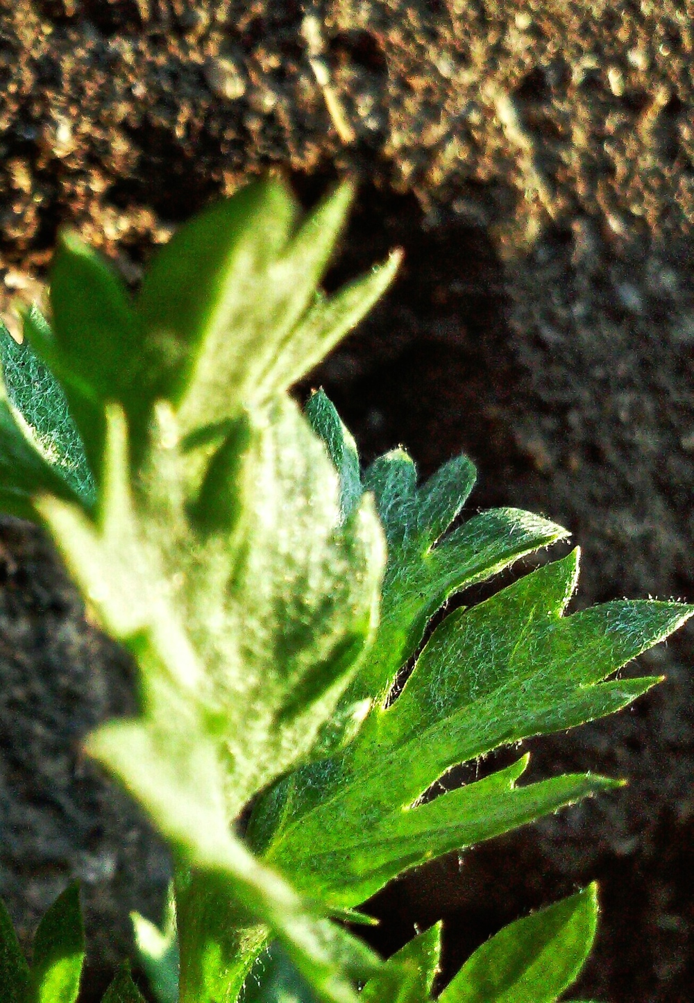 close-up-tiny-green-plant-wbc.jpg
