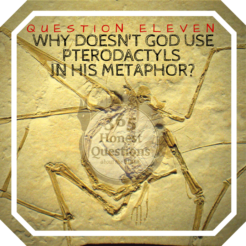 365 Honest Questions, Question 11: Why Doesn't God Use Pterodactyls in His Metaphor?