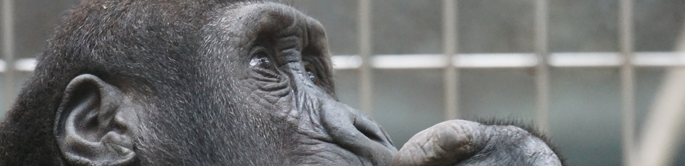 close-up ape