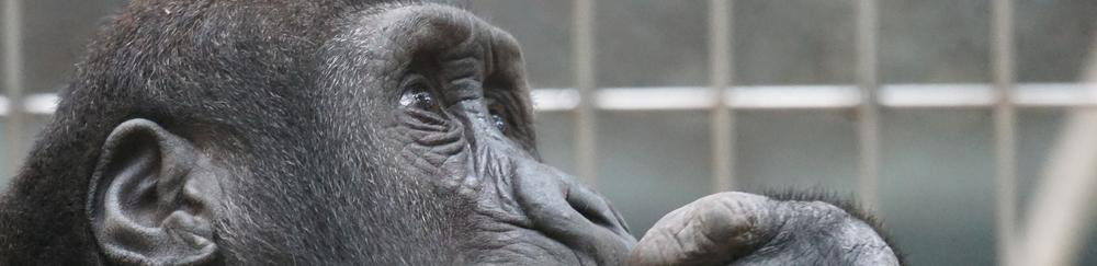 close-up ape