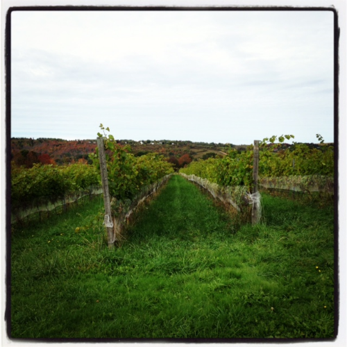 Because wineries in Nova Scotia.