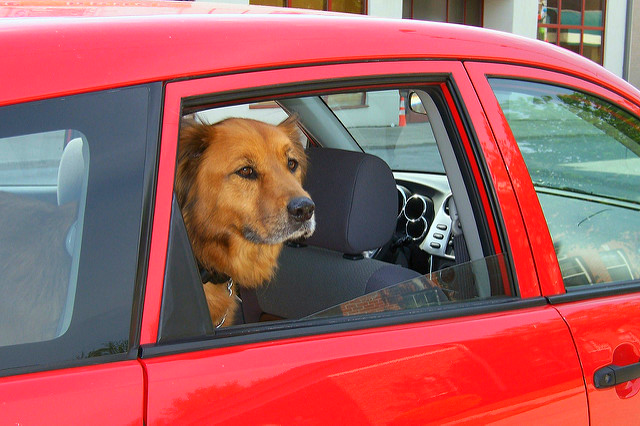 Dog In Hot Car Lawyer