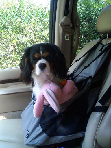Animal Car Crash Lawyer