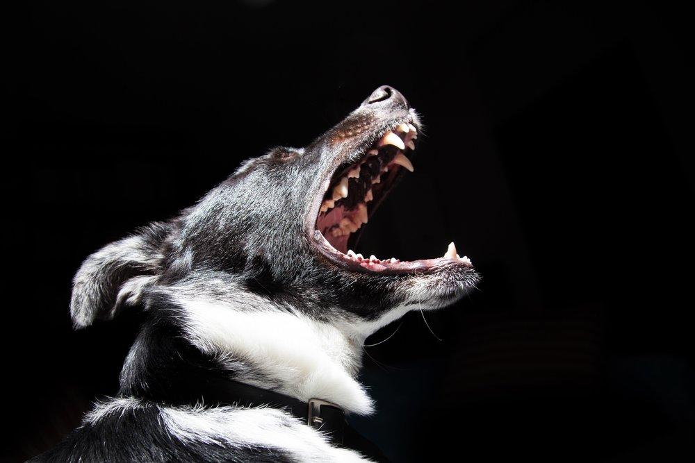 Detroit Dog Bite Lawyer