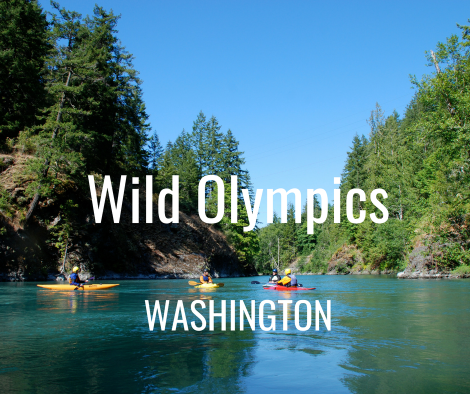 The Wild Olympics bill would designate 19 new Wild and Scenic River segments, protecting recreation opportunities and invaluable wildlife habitat, as well as designate more than 126,500 acres as new Wilderness. (S. 483/H.R. 1285).