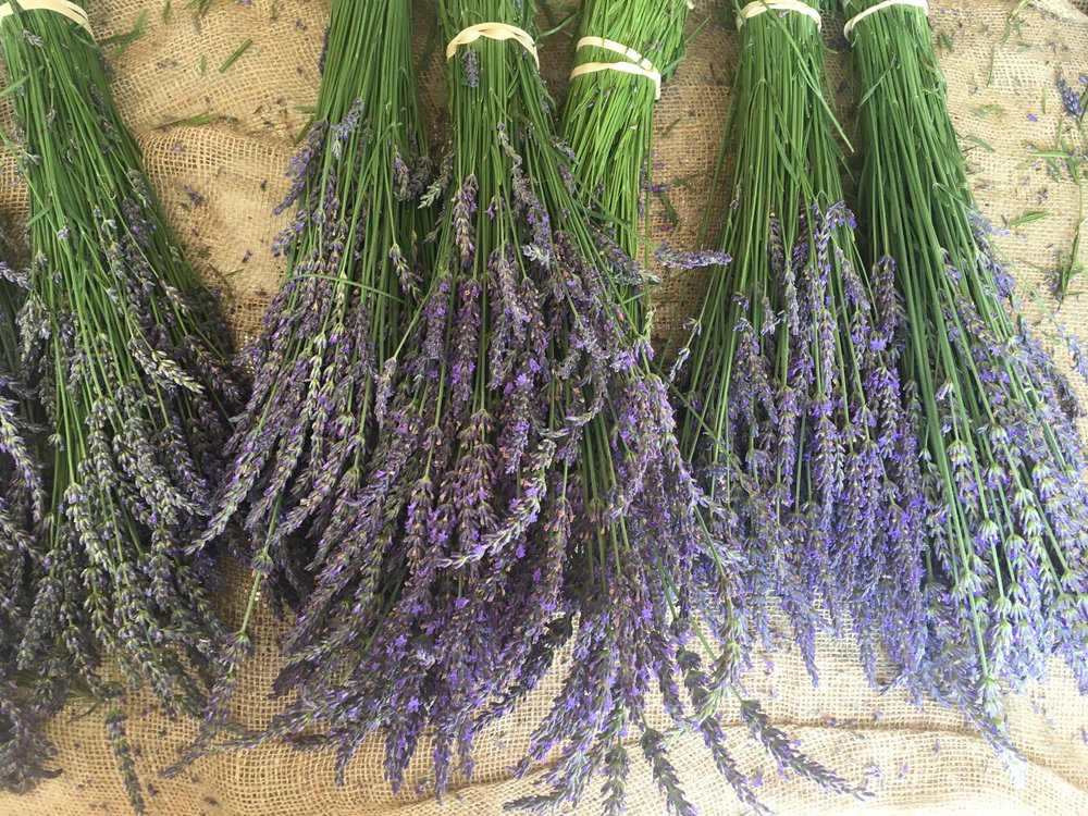 Can't make it but still wanna buy some lavender? - You can still buy bunches of lavender, soap and more at this link.