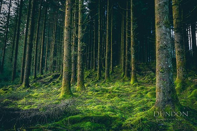 Fernworthy forest on Sunday. #woods #fernworthyforest #fernworthy