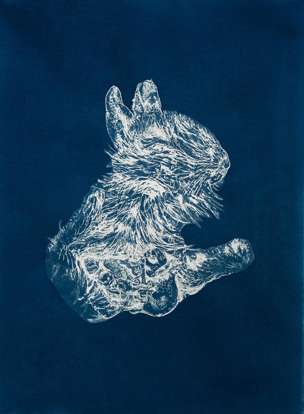 rabbit copy.jpg