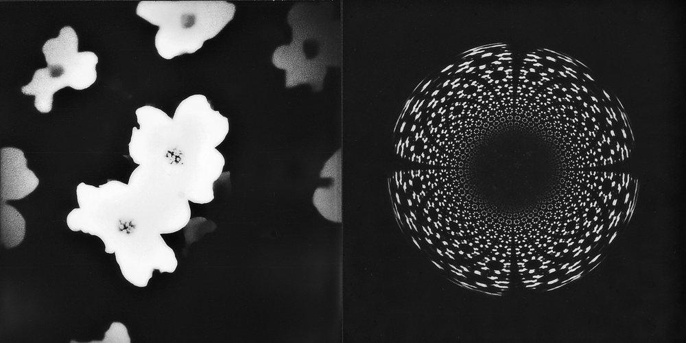 2_AnikaToro_AbstractedDogwood.JPG
