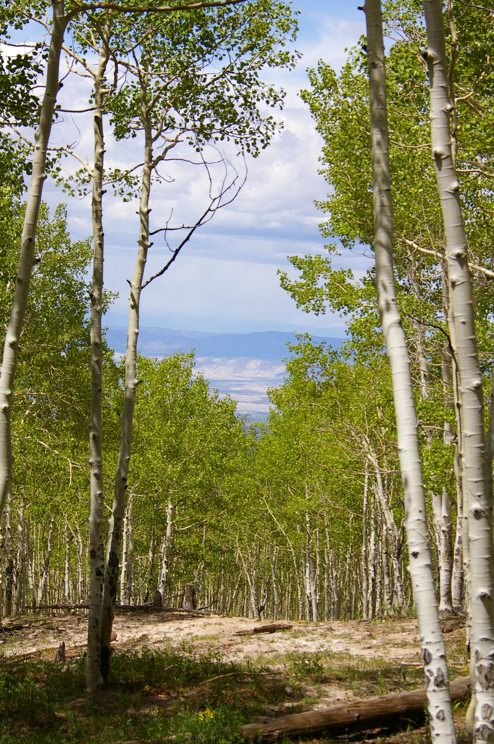 Spruce Mt 5 - aspen1.jpg