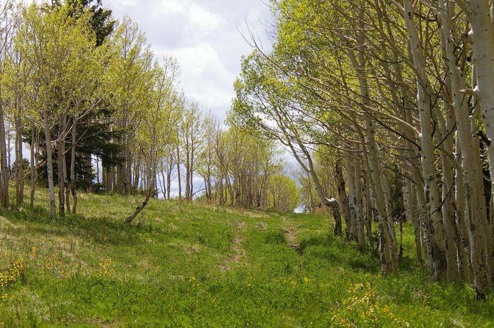 Spruce Mt 5 - aspen2.jpg