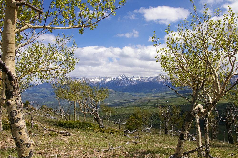 Spruce Mt 5 - sneffels.jpg