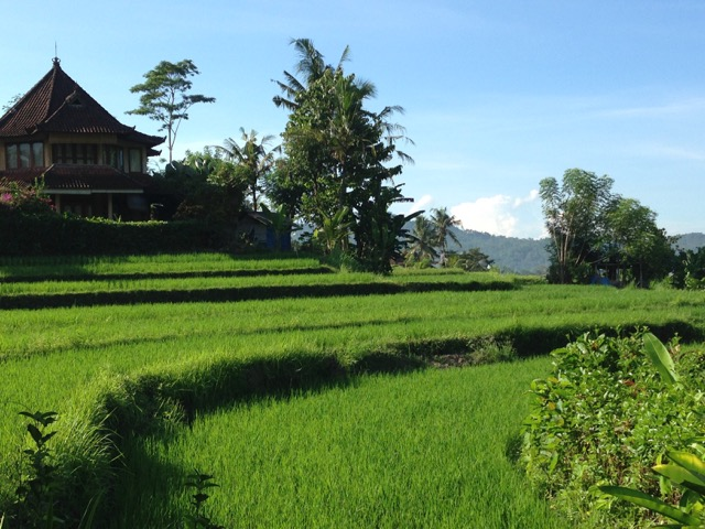 terraced rice fields surrounding Nirtarta