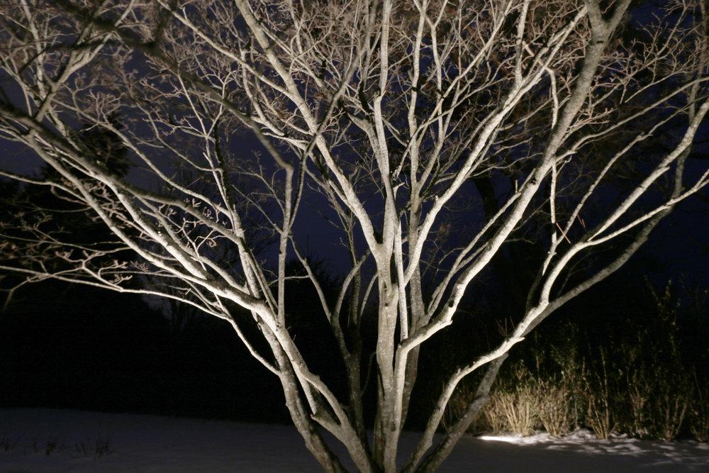 Tree Closeup.jpg