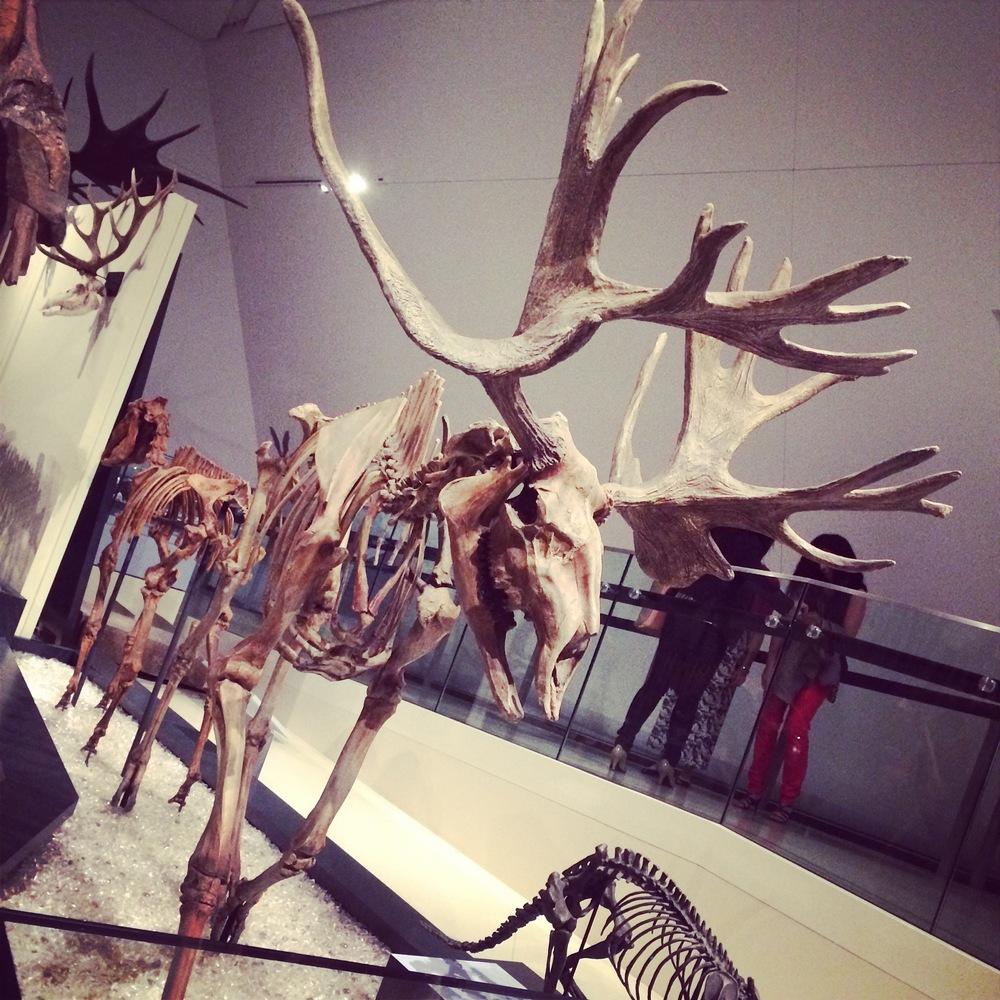 Ice Age - Moose