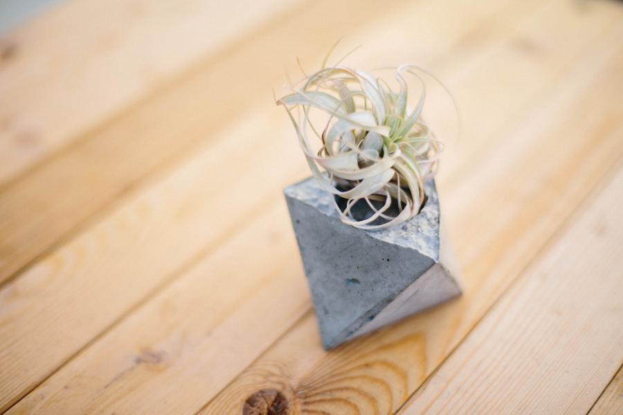 concrete planter succulent.png