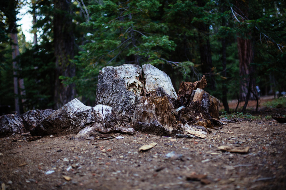 lake tahoe camping sugar pine  (4 of 61).jpg